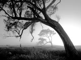 Black And White Photography 20 Beautiful Black And White Nature Photography