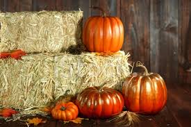 thanksgiving theme with pumpkins on wood grunge background stock