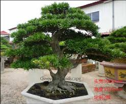 Wholesale Home Artificial Indoor Potted Plants Hot Sale