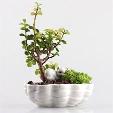 Cute Succulent Planters by Popular Pottery Planters Buy Cheap Pottery Planters Lots From