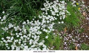 small white flowers white shaped flowers stock photos white shaped flowers