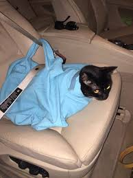 how to travel with a cat images Product review cat in the bag jpg