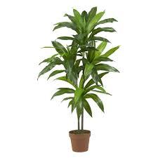 marvelous house plants in the healthy indoor habitat horticulture