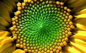foto wallpaper bunga matahari 10 wallpaper bunga matahari deloiz wallpaper