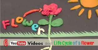 Life Of A Flower - 6 science youtube videos about life cycle of a flower