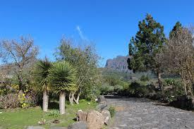 Botanical Gardens El Paso Keesjan Photo Keywords Dracaenaceae Plants In Cultivation
