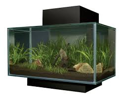 fluval edge 23l aquarium black co uk pet supplies