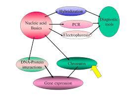 hybridization diagnostic tools nucleic acid basics pcr