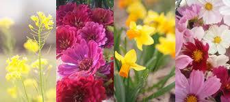 farm fresh flowers bouquet of fresh flowers wednesday hepzibah farms