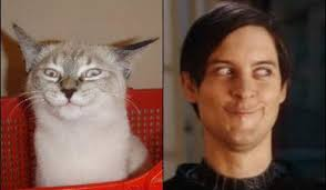 Meme Tobey Maguire - cats who look like famous people 5 tobey maguire comics and memes