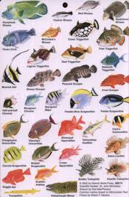 florida saltwater fish identification guide search results