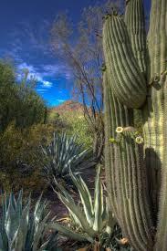 Scottsdale Botanical Gardens 301 Best Desert Botanical Garden In Images On Pinterest