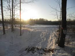 backyard sugaring the permaculture way an excerpt farming the woods