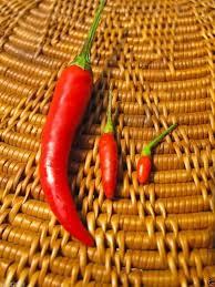Chili Pepper Home Decor Amazon Com Pepper Siling Labuyo Filipino Bird U0027s Eye Chili 10