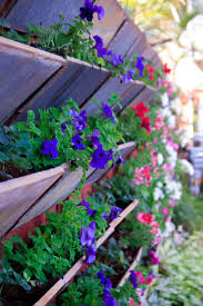 Pictures Of Garden Flowers by Free Stock Photo Of Blue Flowers Flower Garden Flower Wallpaper