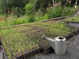 native plant propagation services u2013 earth tones native plants