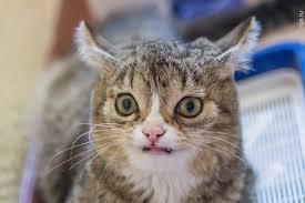 Good Cat Meme - create meme the surprised cat the surprised cat stoned cat