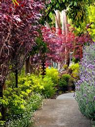 top 10 trees for small gardens garden design is the foundation to