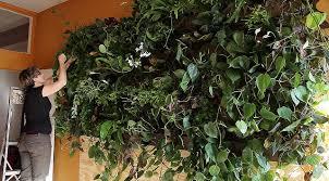 top 8 most common indoor plants