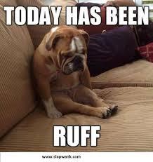 Best Dog Memes - funny dog memes best collection of funny dog memes