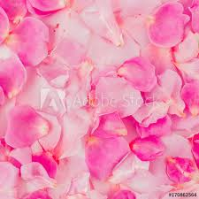 where can i buy petals pattern of pink petals s day concept flat lay