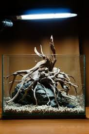 Aquascaping A Reef Tank Http Www Just Aquascaping De Information Layouting Iwagumi