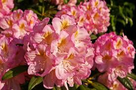 free images landscape nature blossom flower petal bloom