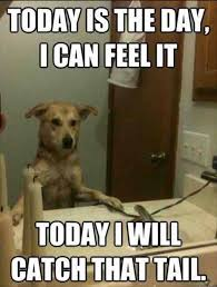 Mirror Meme - funny dog memes i top 50 of all time i world wide interweb