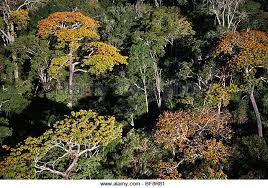Tropical Dry Forest Animals And Plants - dry deciduous forest stock photos u0026 dry deciduous forest stock