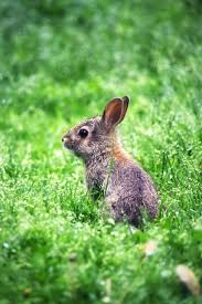 146 best rabbits images on pinterest rabbits the rabbit and