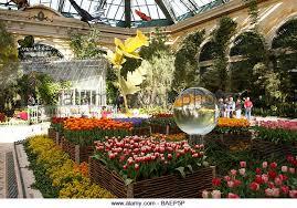 Bellagio Botanical Garden Flowers At The Bellagio Conservatory And Botanical Garden Stock