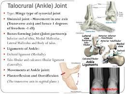 Subtalar Joint Fracture Lower Limb Bones Joints Muscles Dr B B Gosai