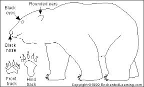 polar bear printout enchantedlearning