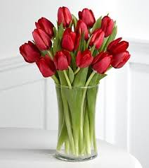 Images Of Tulip Flowers - best 25 red tulips ideas on pinterest red flowers purple