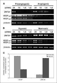 Sqrt 261 Repression Of Vascular Endothelial Growth Factor Expression By The
