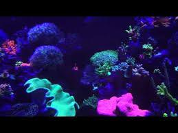 sb reef lights review spar38 reef and fuge lights