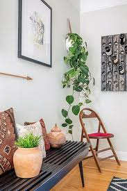 best low light house plants six houseplants you u0027ll find it really difficult to kill