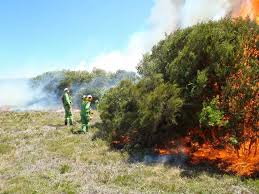 saving the coastal banksia trees of wilson s prom munsell color