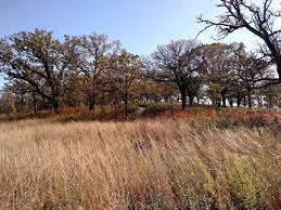 prairie oak ecosystems of the the relict and the reborn restoring iowa u0027s savannas next