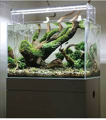 Aquascape Chicago 509 Best Aquascape Images On Pinterest Aquascaping Planted