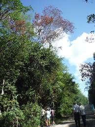 escape of the invasives top six invasive plant species in the august 2016 u2013 invasive species