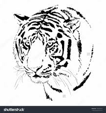 tiger side face sketch animal face sketch drawing art library