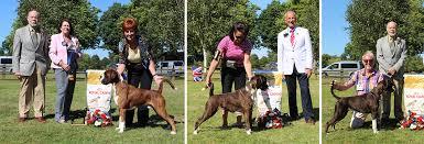 boxer dog shows 2016 british boxer club championship show 2016