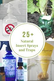 Homemade Fly Trap by Natural Homemade Insect Sprays And Traps