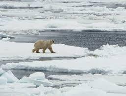 prince leopold island polar bears arctic travel pictures