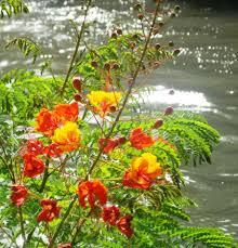 san antonio flowers san antonio riverwalk brilliant and flowers pixdaus