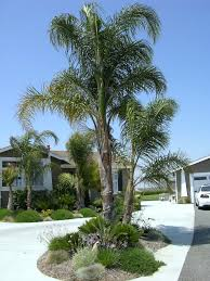 Florida Landscape Ideas by Explore M G U0027s Photos On Photobucket Backyard Pinterest