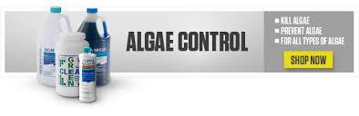 top 10 algae prevention tips leslie u0027s poolapedia