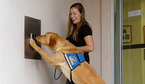 Training A Guide Dog For The Blind Cci Org Faqs