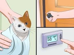 Pet Ready Exterior Doors by How To Bathe Your Cat With A Damp Towel Vripmaster